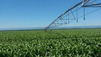 Refertilización con nitratos: alternativa para aumentar productividad en maíces tardíos
