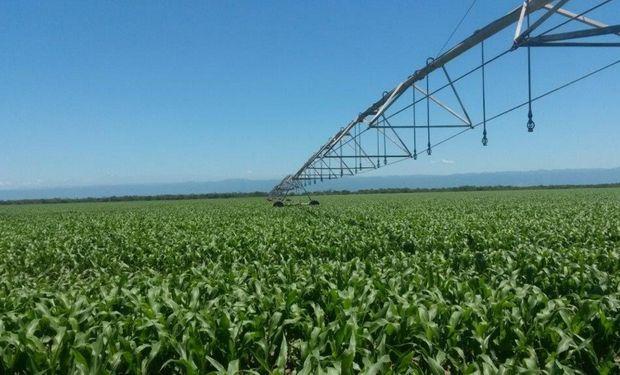 El uso de una fuente nitrogenada con nitratos en su composición, aumenta la eficiencia del sistema.