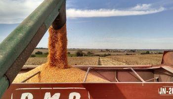 Punto central de la reforma tributaria tendrá efecto sobre la producción agrícola