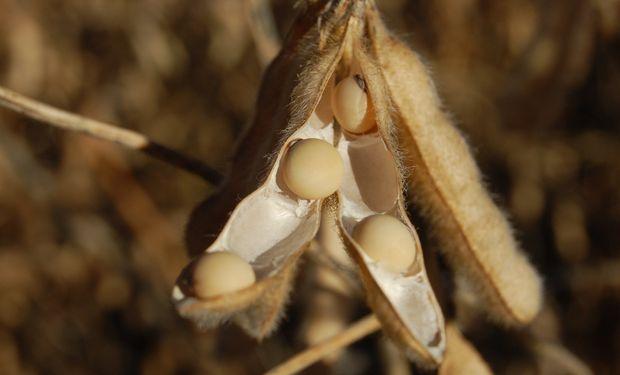 Definiciones en la registración obligatoria de granos