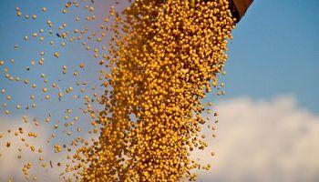 Operadores de granos negocian limitar cambios