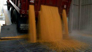 Avances en la implementación del registro obligatorio de granos