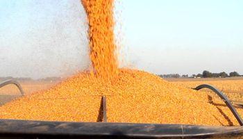 Mejora la capacidad de compra de los granos