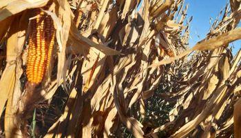 ¿Suba estacional? Un fuerte aumento de los fertilizantes a nivel internacional contagia al mercado local
