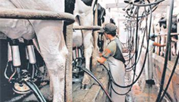 Escenario positivo para la producción lechera