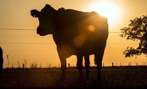 """Expectativa por los próximos remates ganaderos: """"No hay un gran volumen de invernada y cría"""""""