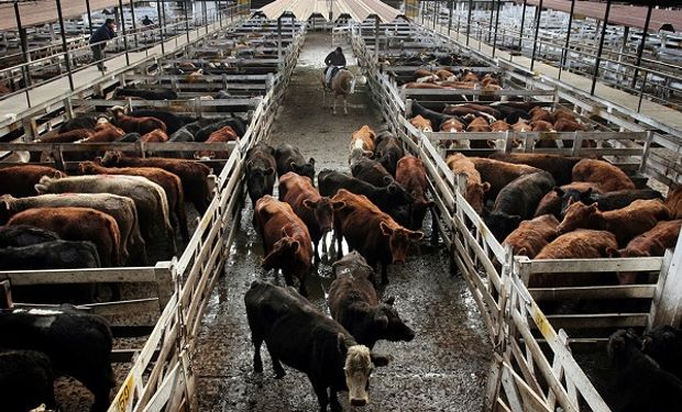 Buenos Aires aprobó el protocolo para remates de ganado: cómo se debe trabajar