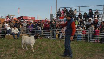 Boer: las exóticas cabras de AgroActiva