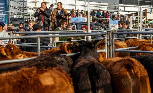 Concursaron 220 cabezas de la mejor calidad, remitidas por doce productores de Buenos Aires, Córdoba y San Luis.
