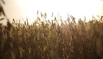 Con modalidad inédita, se remató a $51.500 la tonelada el primer lote de soja de la campaña 2020/21
