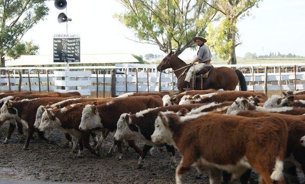 Argentina recupera oportunidades de exportar carne