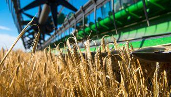 Caen los rindes de trigo y cebada por el aumento de la temperatura