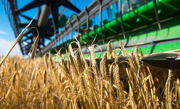 Los cereales de invierno como trigo y cebada requieren de temperaturas frescas para expresar todo su pontencial de rinde.