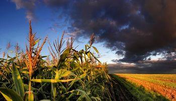 Por la caída de precios, el Estado avanza sobre la renta agrícola