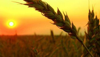 Cayó con fuerza la participación del Estado en la renta agrícola