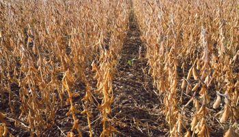 Importante mejora de la rentabilidad agrícola esperada