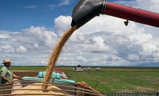 Hay que agregarle la caída del precio de grano en Chicago.
