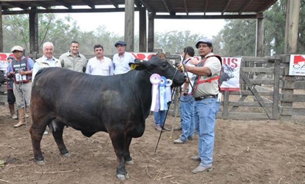 BRANGUS: La Reservado Gran Campeón Hembra le correspondió al Box 28, RP 1511 de la Cabaña Rancho Grande del Fideicomiso Agropecuario Peyrano.