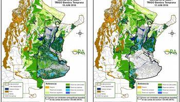 Trigo: altos valores de humedad para el sur de la región pampeana