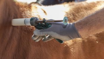 Desafío para 2022: anticipan un cambio de paradigma por el mal uso de antibióticos en la producción animal