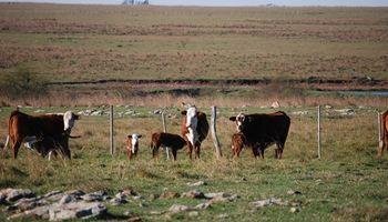 Restricciones al campo: la incertidumbre golpea al stock y la producción ganadera