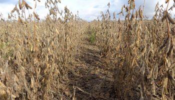 La propuesta de la cadena de la soja para eliminar retenciones sin impacto fiscal