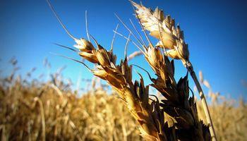Se suman pedidos de eliminación de retenciones al trigo