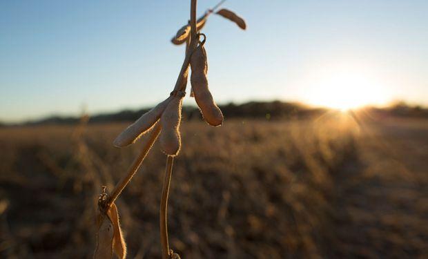 """""""Pensamos que el próximo ciclo la superficie sembrada con soja no va a caer tanto como se cree"""", San Martín."""