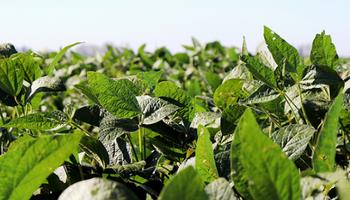 """Soja: proponen reducir retenciones al 15% para corregir """"desajustes económicos generados por la política anti agro"""""""