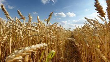 Domínguez: hubo errores con el trigo