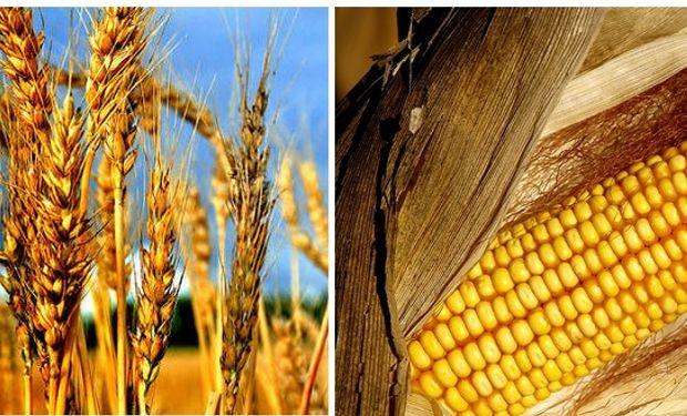 """""""No se puede hacer de manera aislada sino en el marco de una política agropecuaria"""", manifestó Domínguez."""