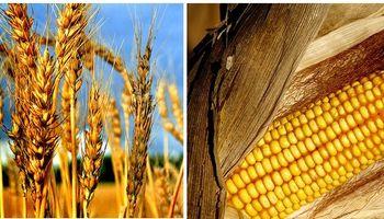 ¿El oficialismo propone suspender retenciones al trigo y al maíz?