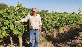"""Productores vitivinícolas rechazan el aumento de retenciones que sufrió el vino: """"Que fácil es decir cambiá el negocio"""""""