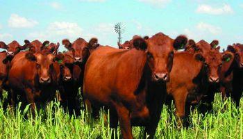 Reunión por mercado de la carne vacuna