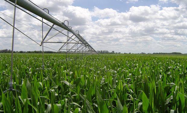 Trigo, maíz y soja con riego: cuánto cuesta y cuándo es negocio