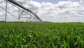 Ensayo: lograron rindes hasta un 115% superiores para el trigo y 51% para el maíz con riego suplementario
