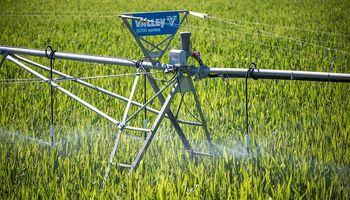 En un año Niña, el riego maximiza los rindes del maíz: qué dicen los ensayos de larga duración realizados por el INTA