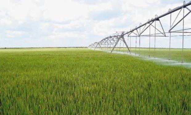 Existen 4 millones de hectáreas con posibilidades productivas a través del sistema.