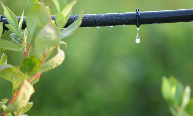 Este desarrollo se debió a la necesidad de intensificar la producción principalmente en zonas donde las precipitaciones son deficientes.