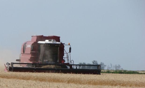 De acuerdo a la Bolsa de Cereales de Buenos Aires el rinde medio nacional se ubica en 19,2 qq/Ha.