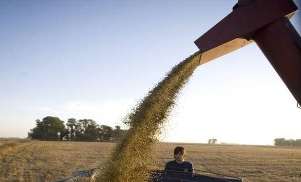 Más soja. La oleaginosa está mostrando un rendimiento promedio de alrededor de 33 quintales por hectárea en Estados Unidos.