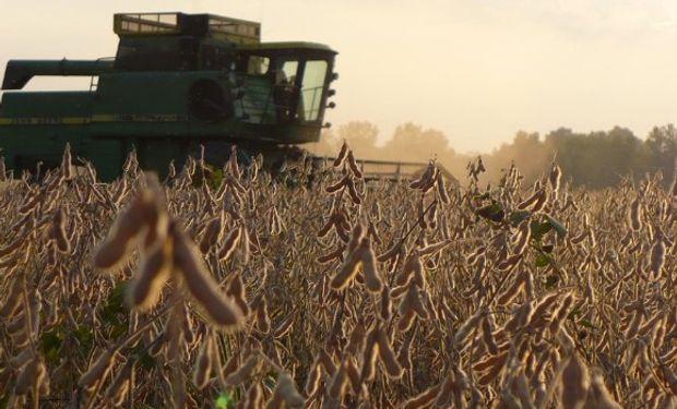 El agua se cobraría unas 600 mil ha de soja en la región núcleo.