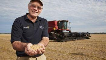 El nuevo récord mundial de rinde de trigo es para Nueva Zelanda