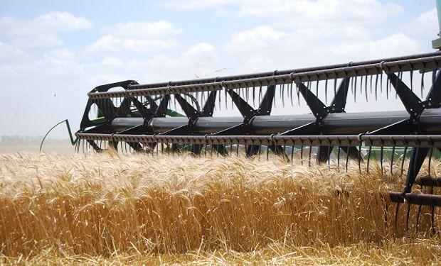 """Hasta ahora, promedio de 8,2 qq/Ha para el trigo: """"Si bien con las lluvias mejoró el aspecto, no se verán incrementados los rindes"""""""