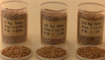 Altos rindes para el trigo, pero... ¿Qué pasó con la calidad?
