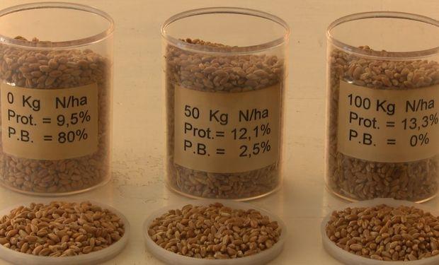 Datos del informe final realizado por el Laboratorio de Calidad Industrial y valor agregado de cereales y oleaginosas del INTA Marcos Juárez.