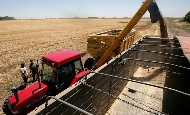 Los rendimientos no estuvieron en los niveles esperados y hubo bajas respecto de la cosecha 2013/2014. Foto: Archivo La Nación