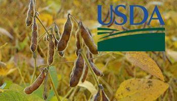 Mirá las expectativas para el USDA