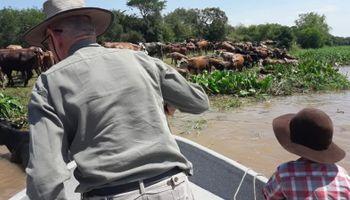 Así buscan salvar el ganado ante la crecida en Santa Fe