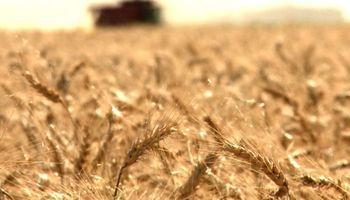 Córdoba será sede del primer congreso internacional del trigo